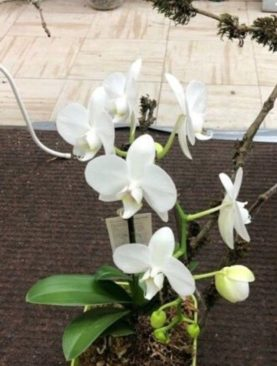 Orchid Multibranch